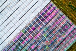 Drone photograph of birds eye view of commercial green house