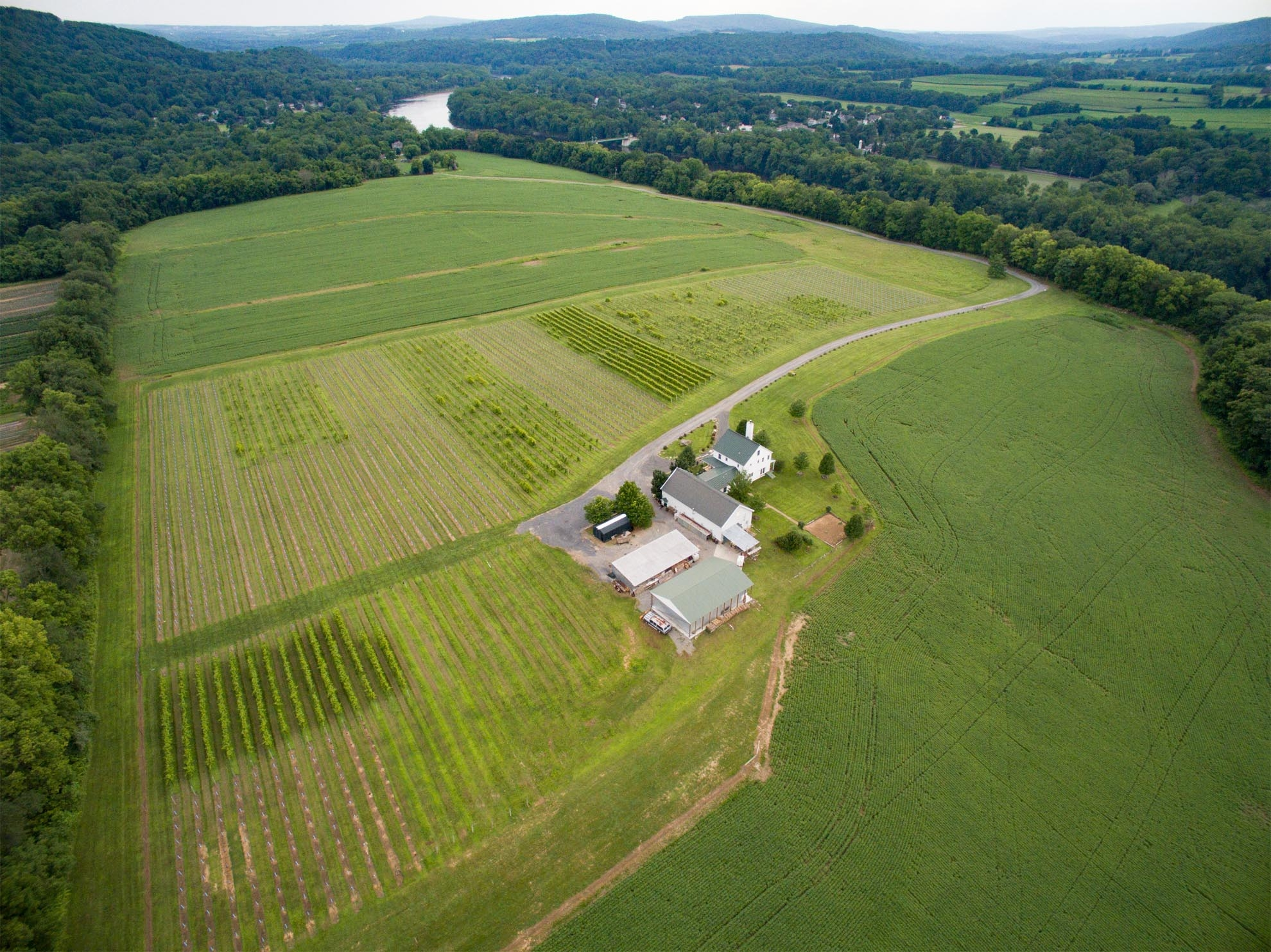 Drone Photograph of Vineyard in New Jersey