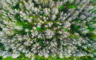 Capture Flowering Trees with Drone Photography